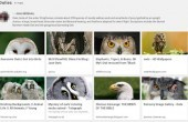 Google Collections: Screenshot weist auf neuen Dienst hin