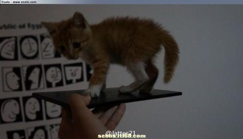 Sony-Xperia-ZU-Togari-cat-500x288