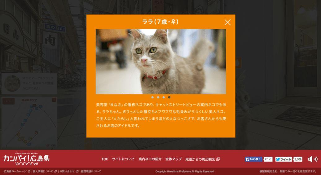cat-street-view-2