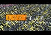 Bikeshare: Chinas Fahrrad-Friedhöfe im Drohnen-Video